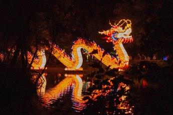 Dragon (1 of 1)